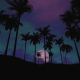 Palm Trees at Sunset And at Night - VideoHive Item for Sale