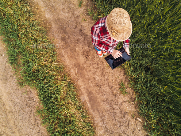 Female farmer using digital tablet computer in green wheat field