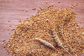 Wheat ears and grains after harvest - PhotoDune Item for Sale
