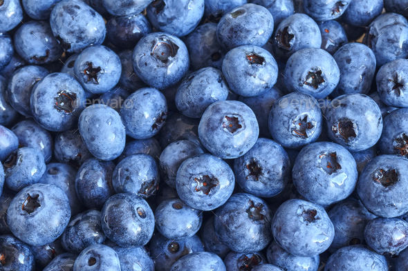 Fresh Blueberries Pictures