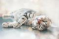 Lazy Cat - PhotoDune Item for Sale