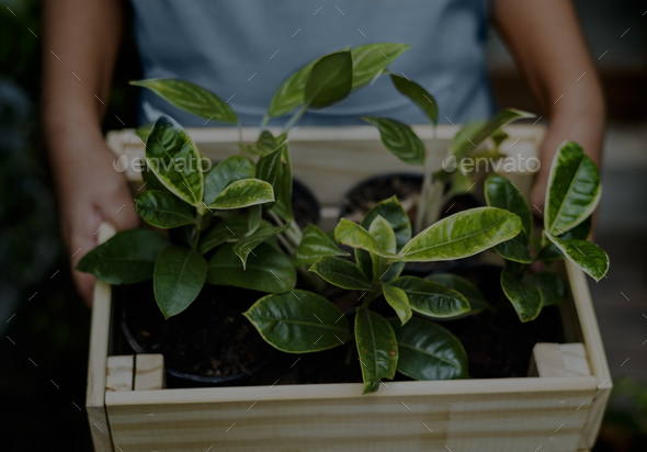 Little Kid Hold Wooden Box of House Plants - Stock Photo - Images