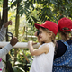 Free Download Little Kids Learning Environment on School Fieldtrip Nulled