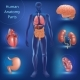 Set of Human Anatomy Parts - GraphicRiver Item for Sale