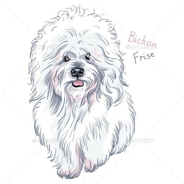 Dog Bichon Frise Breed - Animals Characters