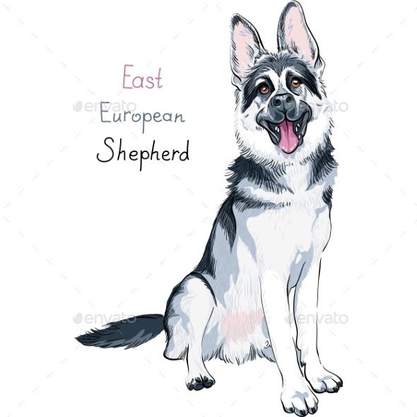East European Shepherd Breed - Animals Characters