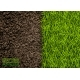 Image of Soil and Green Grass Texture