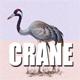 Birds Nature Mainly Crane