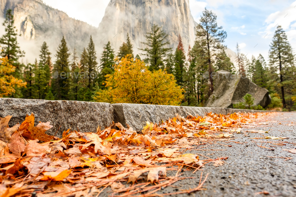 Yosemite Valley cloudy autumn morning with fallen yellow leaves on the wet asphalt