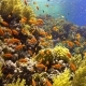 Tropical Fish on Vibrant Coral Reef