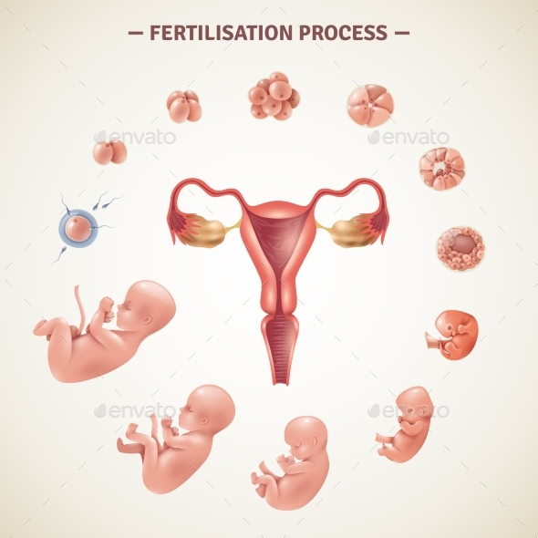 Human Fertilization Process Poster - People Characters