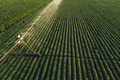 Aerial view of irrigation equipment watering green soybean crops