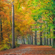Autumn foliage along a forest path - PhotoDune Item for Sale