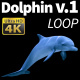 Dolphin 1 - VideoHive Item for Sale