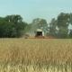 Harvesting of Rapeseed Rape, Harvester Combine Oilseeds - VideoHive Item for Sale