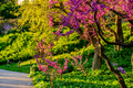 Blossoming peach tree at Montjuic in spring day. Barcelona, Catalonia. - PhotoDune Item for Sale