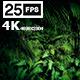 Jungle Palms 06 4K