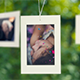 Lovely Tree Photo Gallery - VideoHive Item for Sale