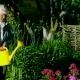 An Elderly Woman Watering Flowers in the Garden of a Country House - VideoHive Item for Sale