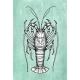 Ink Sketch of Spiny Lobster. - GraphicRiver Item for Sale