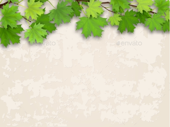 GraphicRiver Maple Tree Branch Green on Old Wall Background 20451403