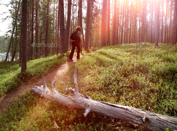 Hiker on forest trail - Stock Photo - Images
