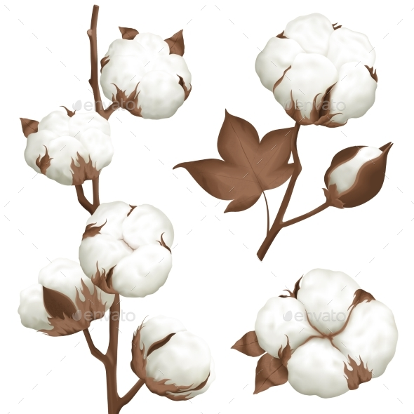 Cotton Plant Boll Realistic Set - Miscellaneous Vectors