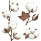 Cotton Plant Boll Realistic Set