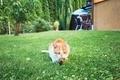 Ginger cat catch a bird