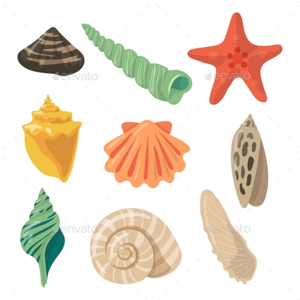 Summer Tropical Objects. Marine Shells in Cartoon - Objects Vectors