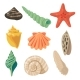 Summer Tropical Objects. Marine Shells in Cartoon