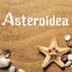 Asteroidea - GraphicRiver Item for Sale