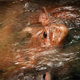 Hippo Head Submerges In Water - VideoHive Item for Sale