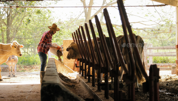 Farmer Feeding Animals Peasant Man At Work In Farm - Stock Photo - Images