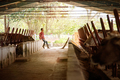 Man Cleaning Stables In Farm Farmer Relaxing On Wall - PhotoDune Item for Sale