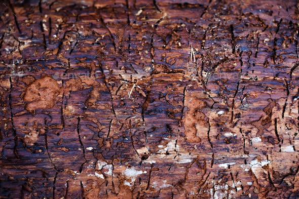 Traces of bark beetle on tree trunk - Stock Photo - Images