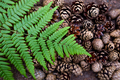 Beautiful pine cones and fern are laid out on the ground.
