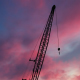 Cranes at Sunset - VideoHive Item for Sale