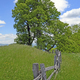 Old Fence in a Mountain Meadow - PhotoDune Item for Sale