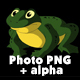 Frog Croaking - VideoHive Item for Sale