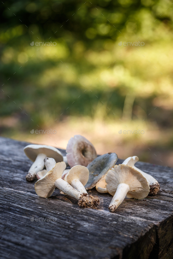 Mushrooms on the table - Stock Photo - Images
