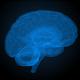 Digital X-Ray Brain Animation