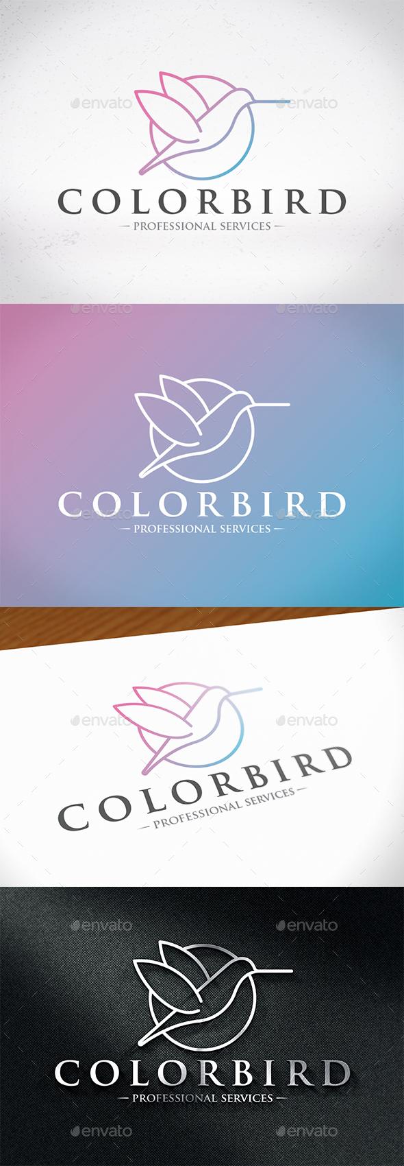 Colibri Bird Color Logo - Animals Logo Templates