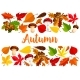 Autumn Falling Leaf Forest Mushrooms Vector Poster