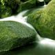 Woodland Stream 1