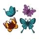 Exotic Tropical Butterflies with Unusual Elegant