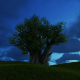 Tree and Evening Sky - VideoHive Item for Sale
