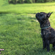 Young female teaching French Bulldog obiedence - PhotoDune Item for Sale