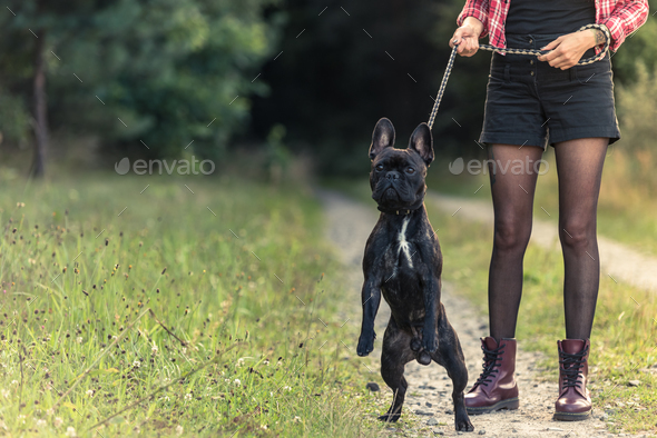Feamle with tattoo holding French Bulldog puppy on lead - Stock Photo - Images