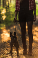 Young woman walking french bulldog in forest at sunset